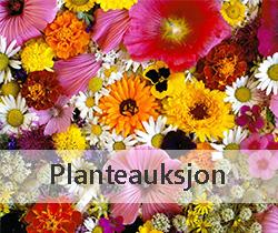 Planteauksjon
